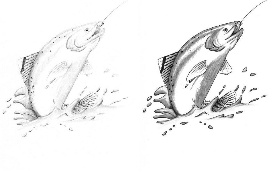Rainbow Trout Coloring Pages Rainbow Trout Coloring Page
